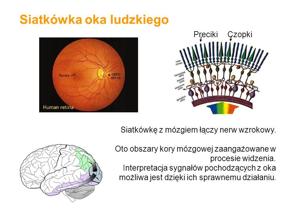 Siatkówka oka ludzkiego