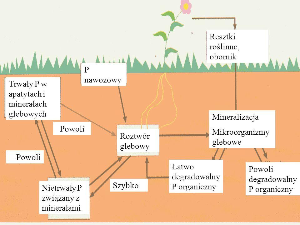 Resztki roślinne, obornik