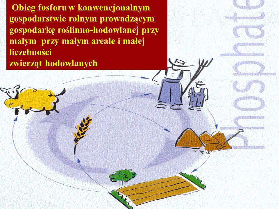 Obieg fosforu w konwencjonalnym