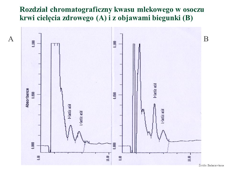 Rozdział chromatograficzny kwasu mlekowego w osoczu krwi cielęcia zdrowego (A) i z objawami biegunki (B)