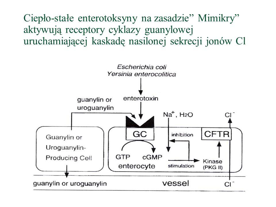 Ciepło-stałe enterotoksyny na zasadzie Mimikry aktywują receptory cyklazy guanylowej uruchamiającej kaskadę nasilonej sekrecji jonów Cl