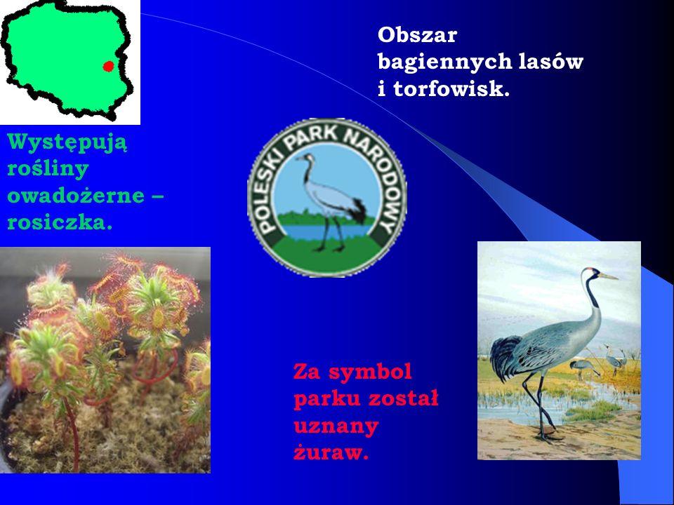 Obszar bagiennych lasów i torfowisk.