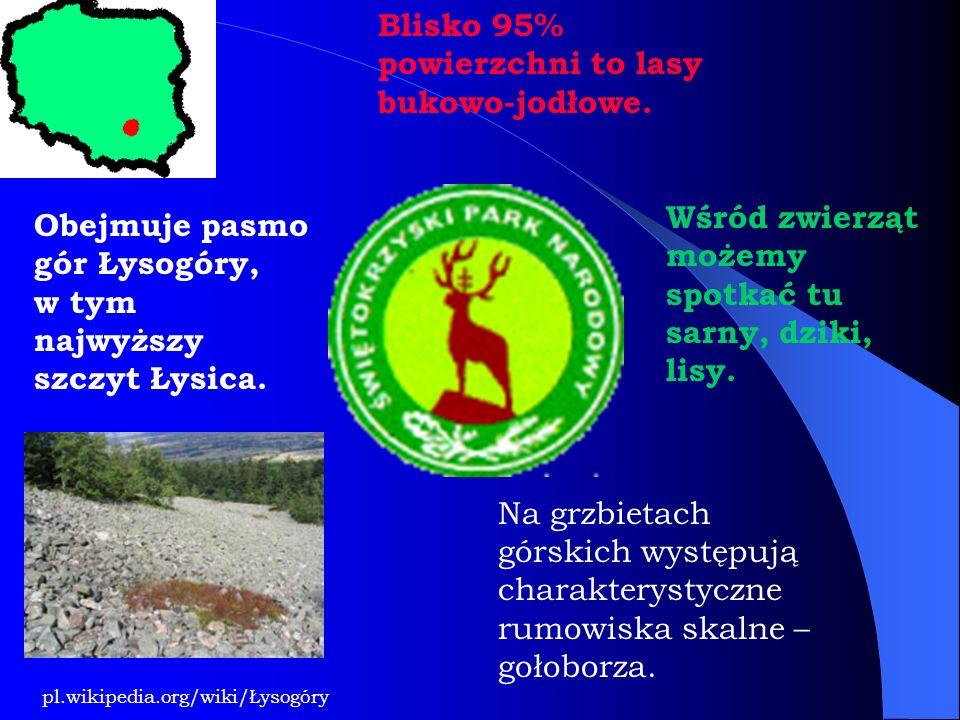 Blisko 95% powierzchni to lasy bukowo-jodłowe.