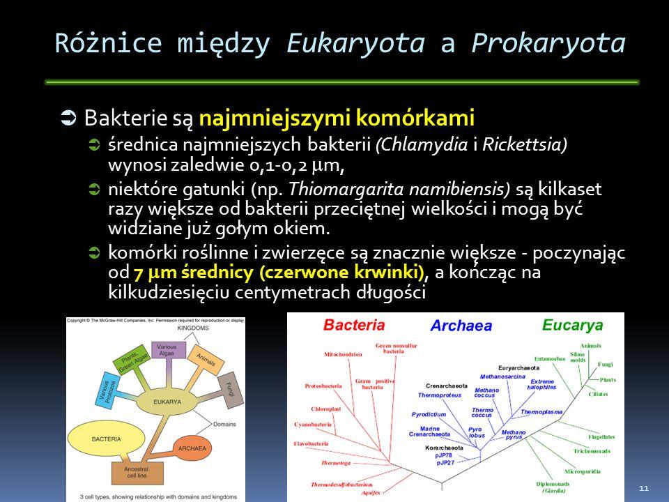 Różnice między Eukaryota a Prokaryota