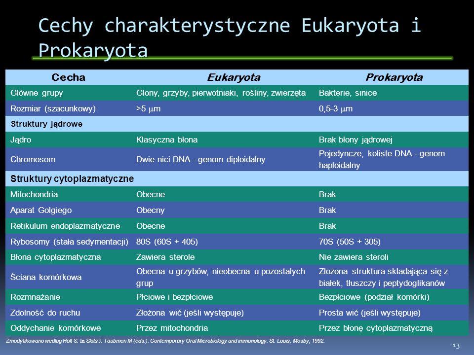 Cechy charakterystyczne Eukaryota i Prokaryota