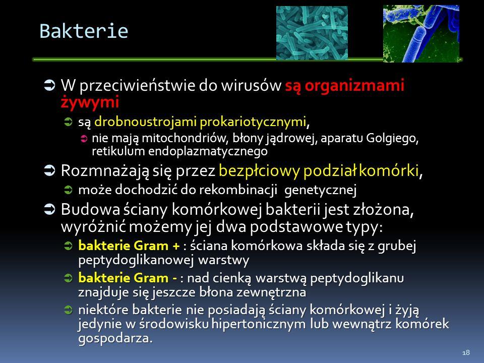 Bakterie W przeciwieństwie do wirusów są organizmami żywymi