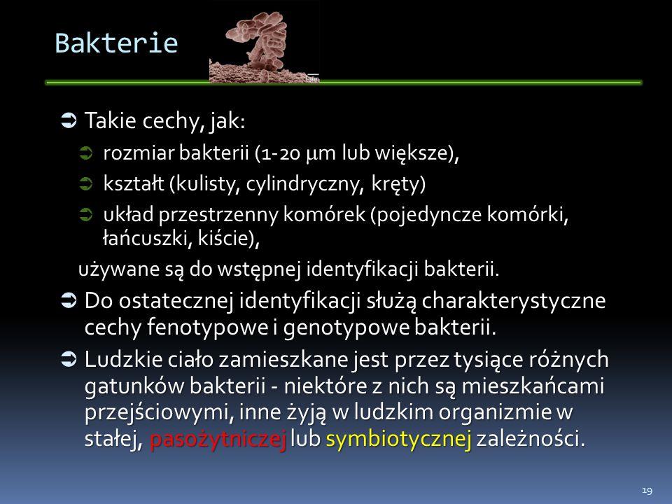 Bakterie Takie cechy, jak: