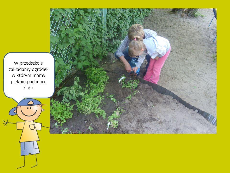 W przedszkolu zakładamy ogródek w którym mamy pięknie pachnące zioła.