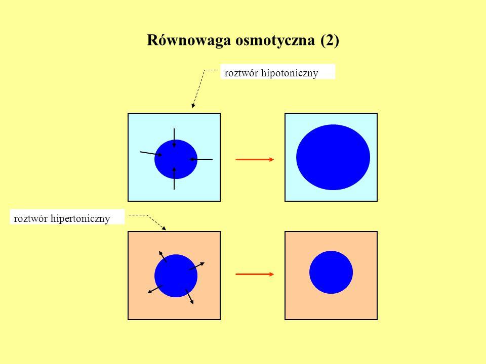 Równowaga osmotyczna (2)