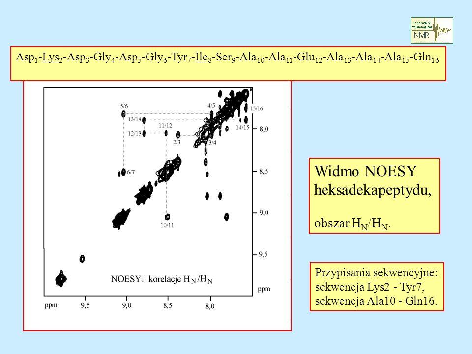 Widmo NOESY heksadekapeptydu, obszar HN/HN.