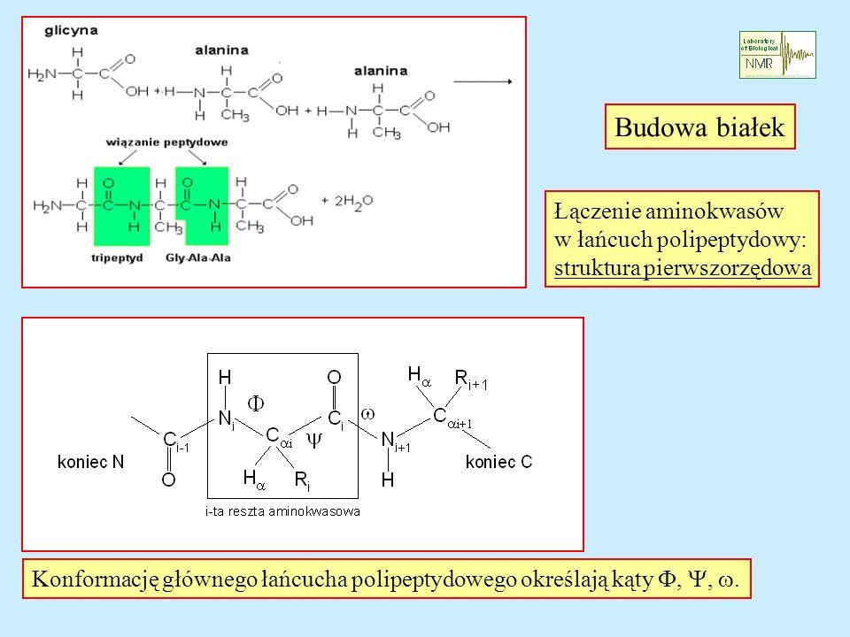 Budowa białek Łączenie aminokwasów w łańcuch polipeptydowy: