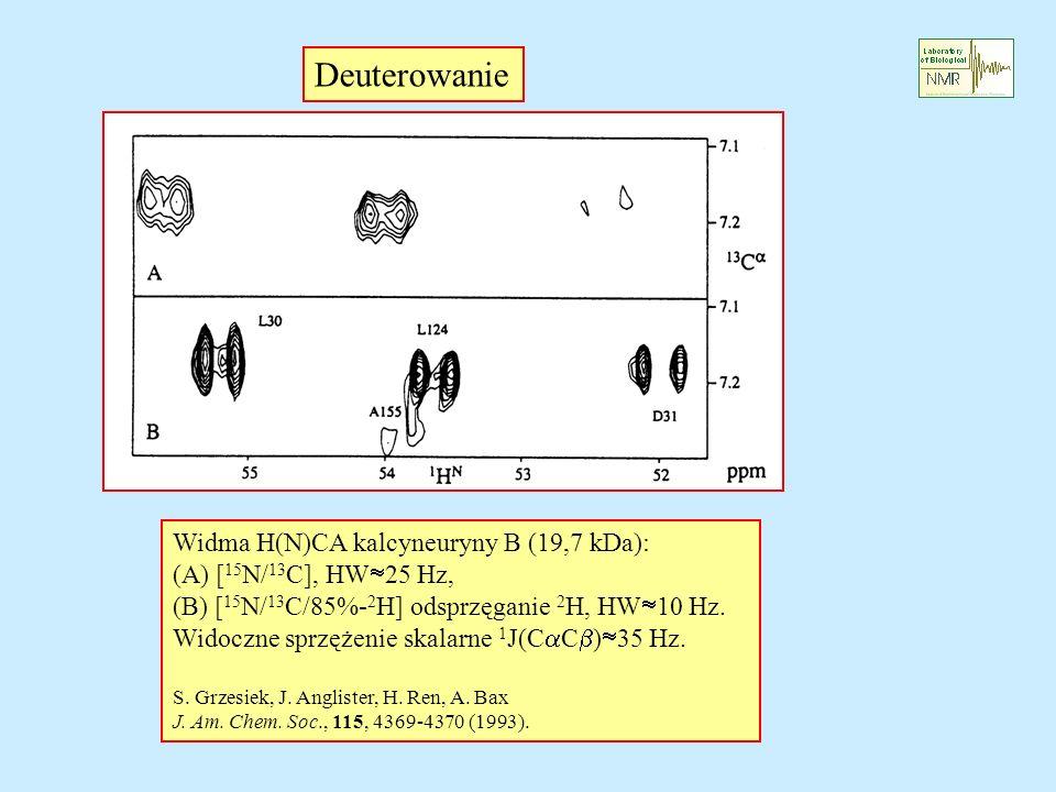 Deuterowanie Widma H(N)CA kalcyneuryny B (19,7 kDa):