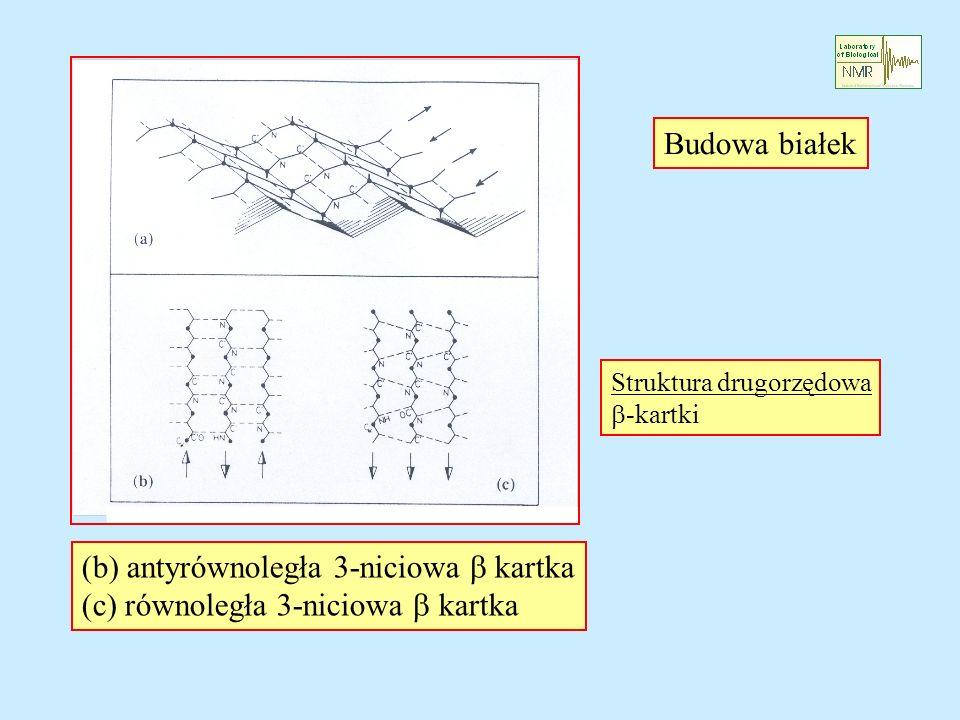 (b) antyrównoległa 3-niciowa b kartka
