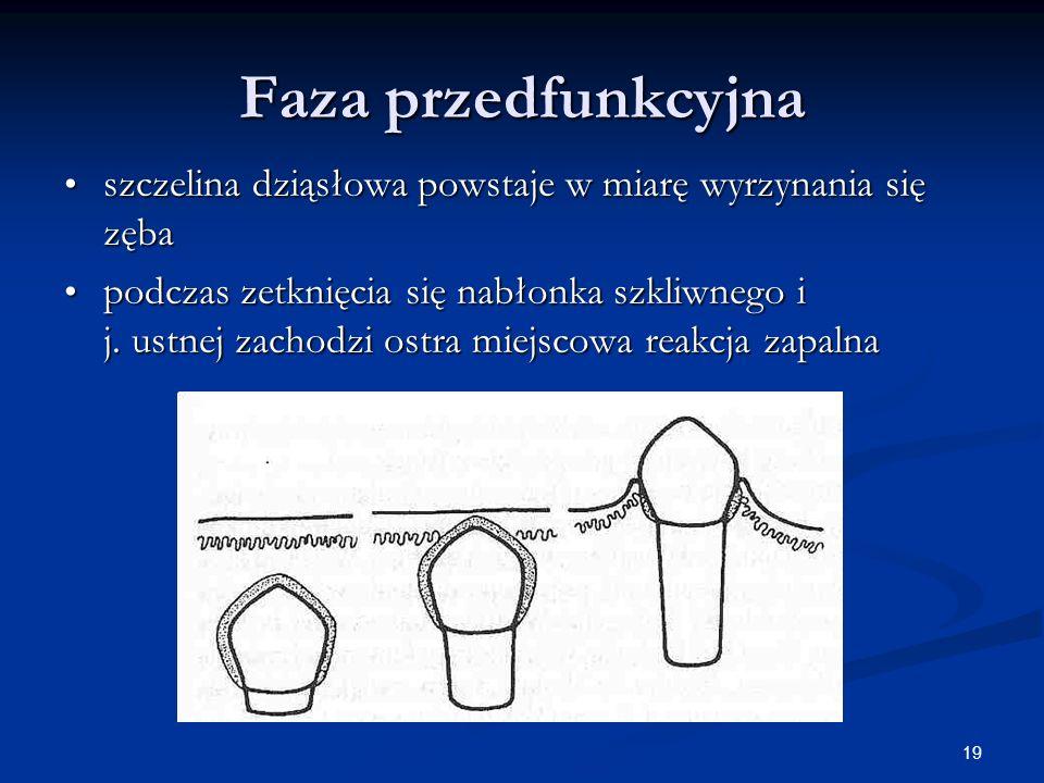 Faza przedfunkcyjna szczelina dziąsłowa powstaje w miarę wyrzynania się zęba.