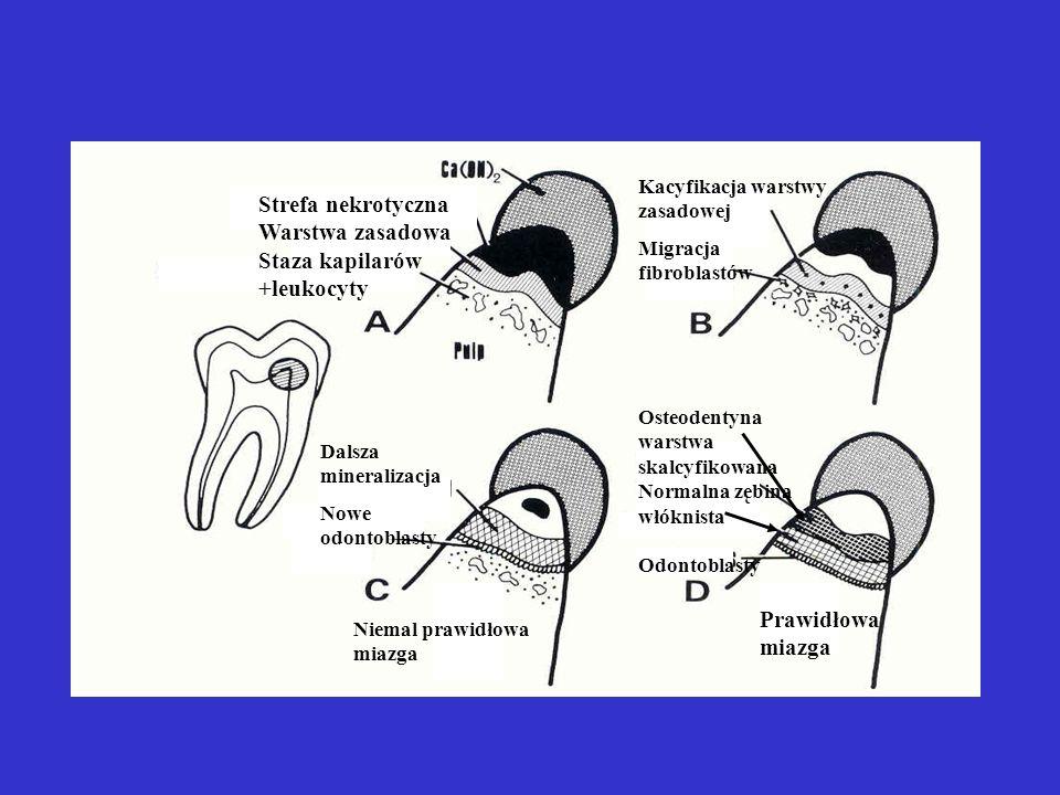 Staza kapilarów +leukocyty