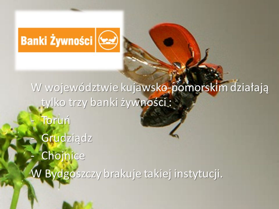 W województwie kujawsko-pomorskim działają tylko trzy banki żywności :