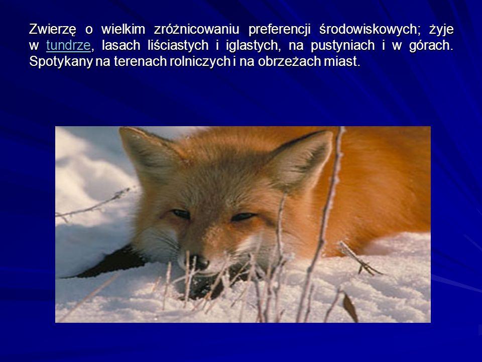 Zwierzę o wielkim zróżnicowaniu preferencji środowiskowych; żyje w tundrze, lasach liściastych i iglastych, na pustyniach i w górach.
