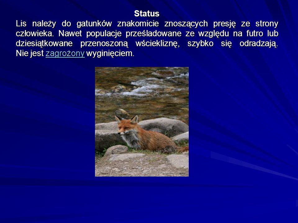 Status Lis należy do gatunków znakomicie znoszących presję ze strony człowieka.