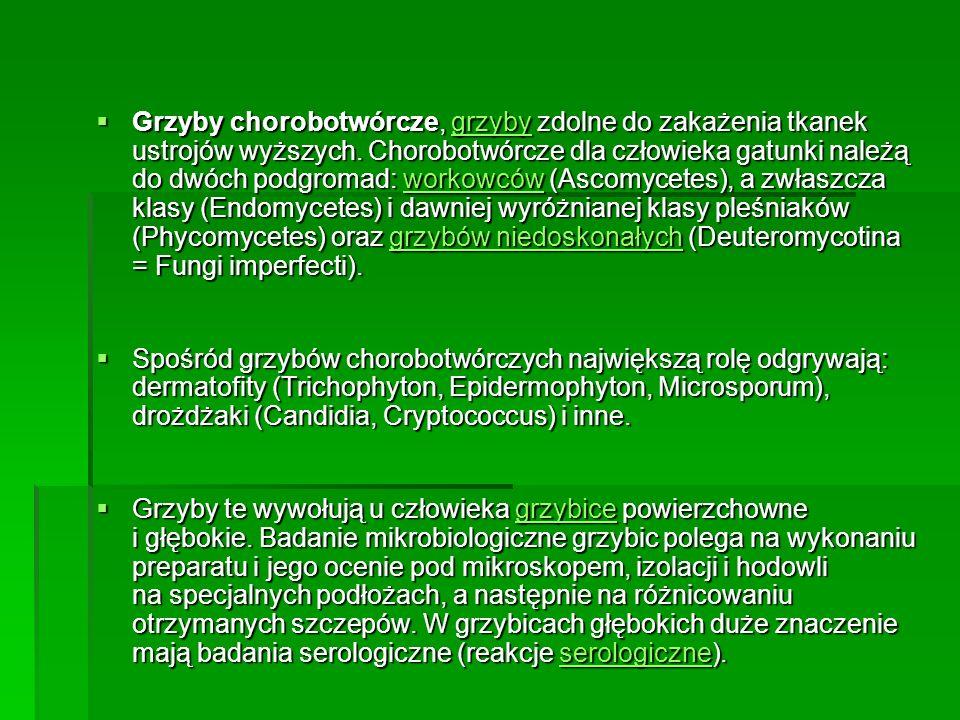 Grzyby chorobotwórcze, grzyby zdolne do zakażenia tkanek ustrojów wyższych. Chorobotwórcze dla człowieka gatunki należą do dwóch podgromad: workowców (Ascomycetes), a zwłaszcza klasy (Endomycetes) i dawniej wyróżnianej klasy pleśniaków (Phycomycetes) oraz grzybów niedoskonałych (Deuteromycotina = Fungi imperfecti).