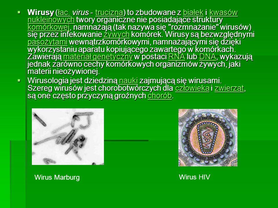 Wirusy (łac. virus - trucizna) to zbudowane z białek i kwasów nukleinowych twory organiczne nie posiadające struktury komórkowej, namnażają (tak nazywa się rozmnażanie wirusów) się przez infekowanie żywych komórek. Wirusy są bezwzględnymi pasożytami wewnątrzkomórkowymi, namnażającymi się dzięki wykorzystaniu aparatu kopiującego zawartego w komórkach. Zawierają materiał genetyczny w postaci RNA lub DNA, wykazują jednak zarówno cechy komórkowych organizmów żywych, jaki materii nieożywionej.