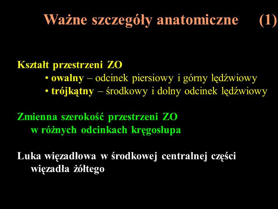 Ważne szczegóły anatomiczne (1)
