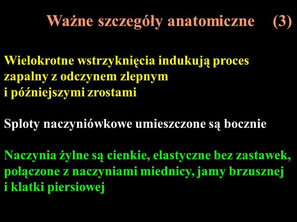 Ważne szczegóły anatomiczne (3)