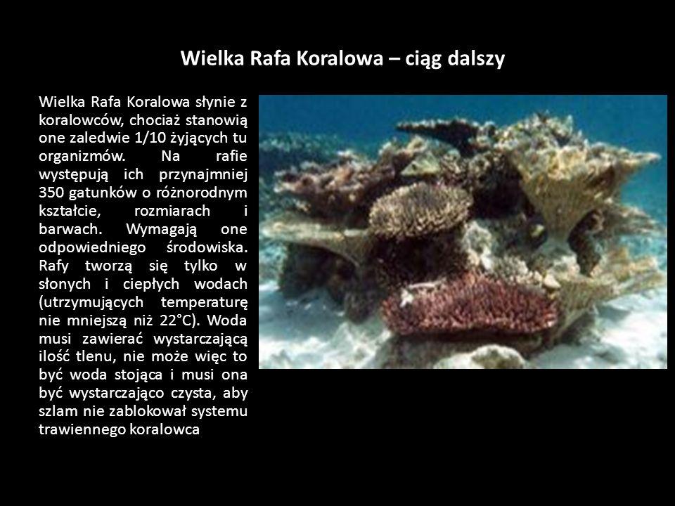 Wielka Rafa Koralowa – ciąg dalszy