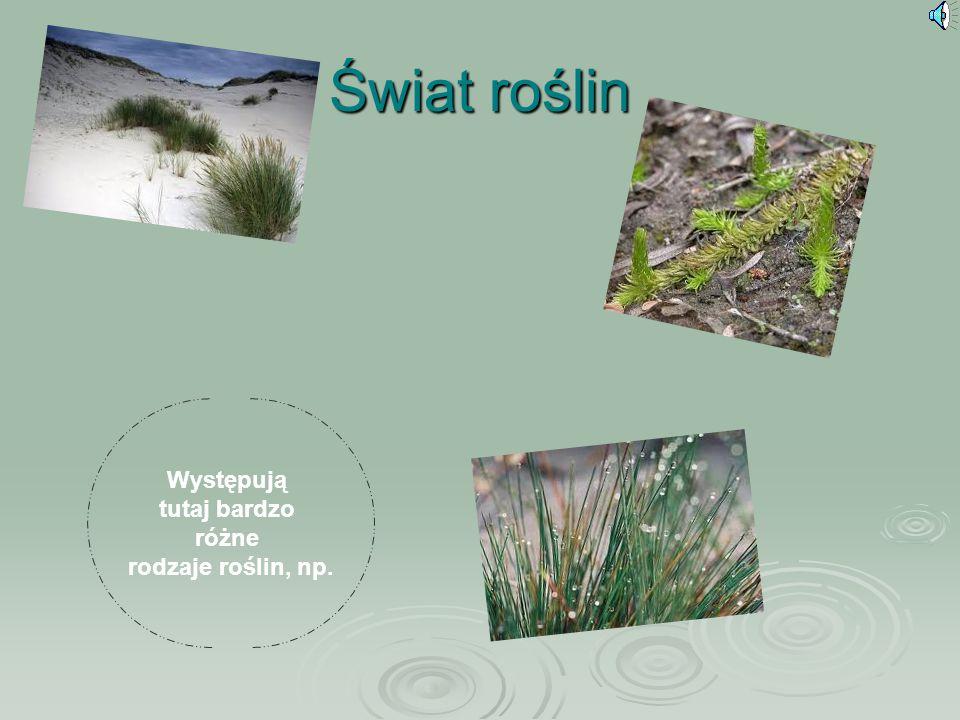 Świat roślin Występują tutaj bardzo różne rodzaje roślin, np.