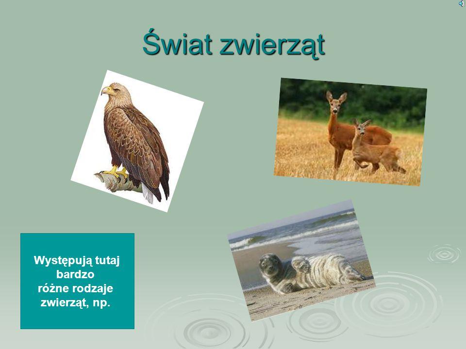 Świat zwierząt Występują tutaj bardzo różne rodzaje zwierząt, np.