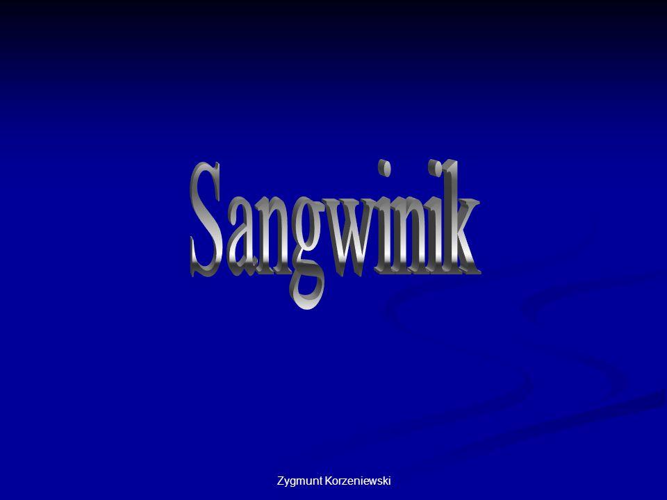 Sangwinik Zygmunt Korzeniewski