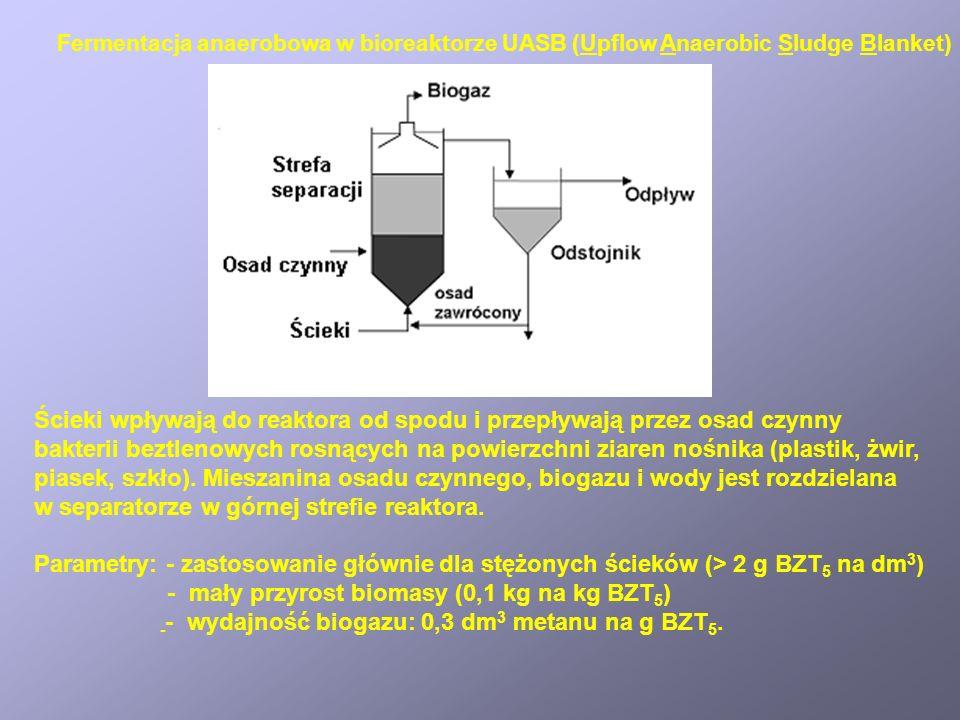 Ścieki wpływają do reaktora od spodu i przepływają przez osad czynny