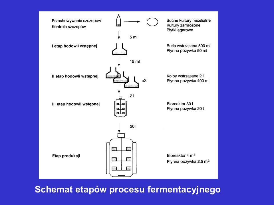 Schemat etapów procesu fermentacyjnego