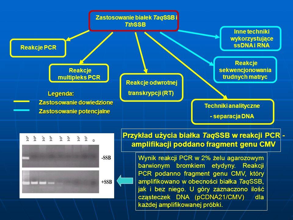 Zastosowanie białek TaqSSB i TthSSB