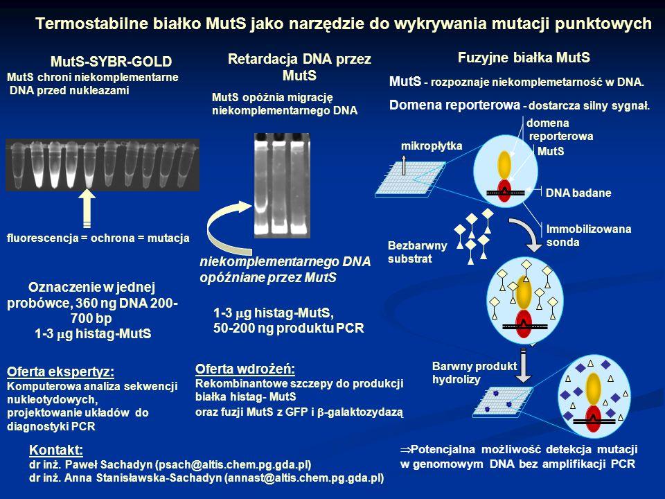 Termostabilne białko MutS jako narzędzie do wykrywania mutacji punktowych