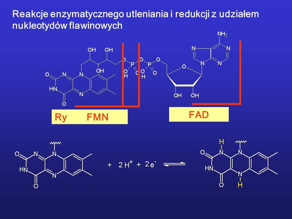 Reakcje enzymatycznego utleniania i redukcji z udziałem