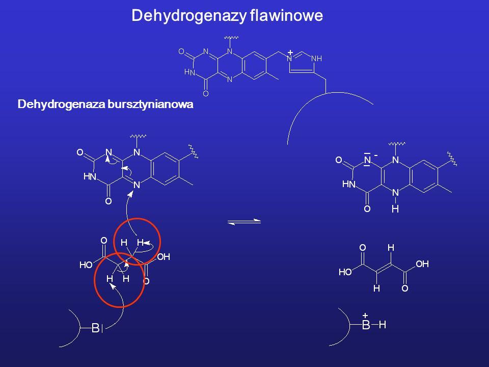 Dehydrogenazy flawinowe
