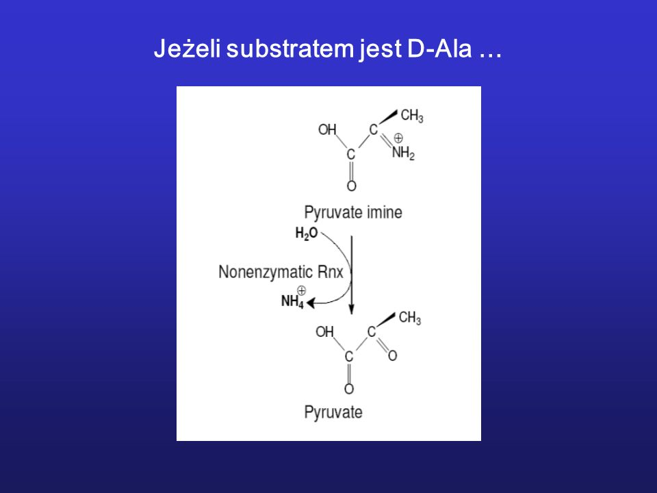 Jeżeli substratem jest D-Ala …