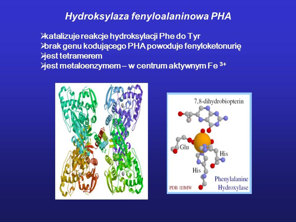 Hydroksylaza fenyloalaninowa PHA