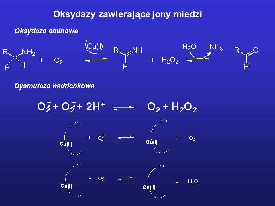 O2 + O2 + 2H+ O2 + H2O2 Oksydazy zawierające jony miedzi