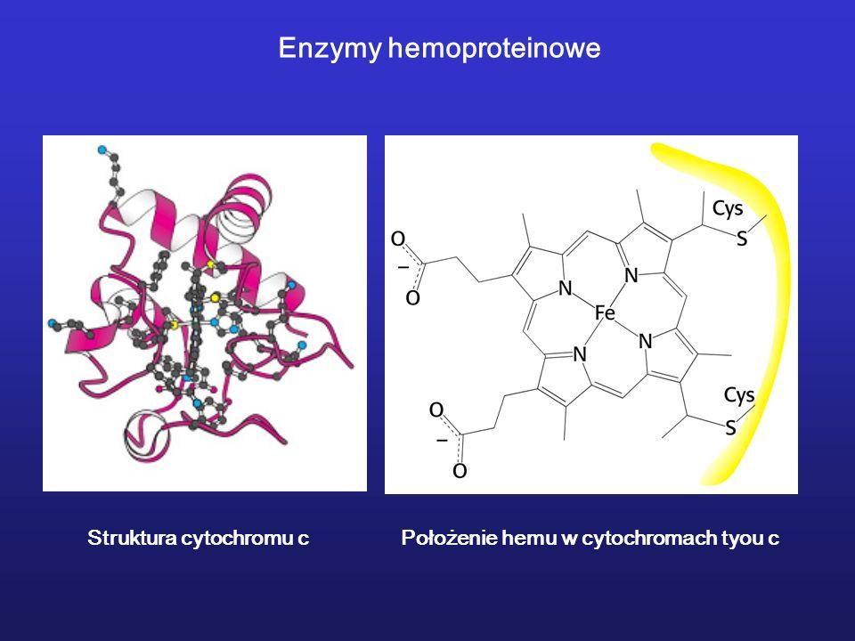 Enzymy hemoproteinowe