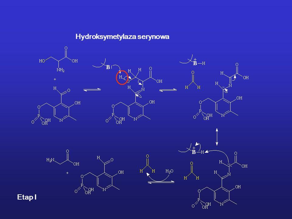 Hydroksymetylaza serynowa