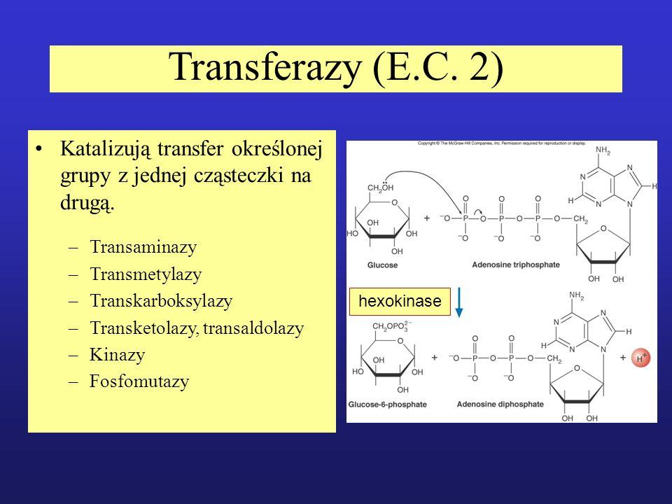 Transferazy (E.C. 2) Katalizują transfer określonej grupy z jednej cząsteczki na drugą. Transaminazy.