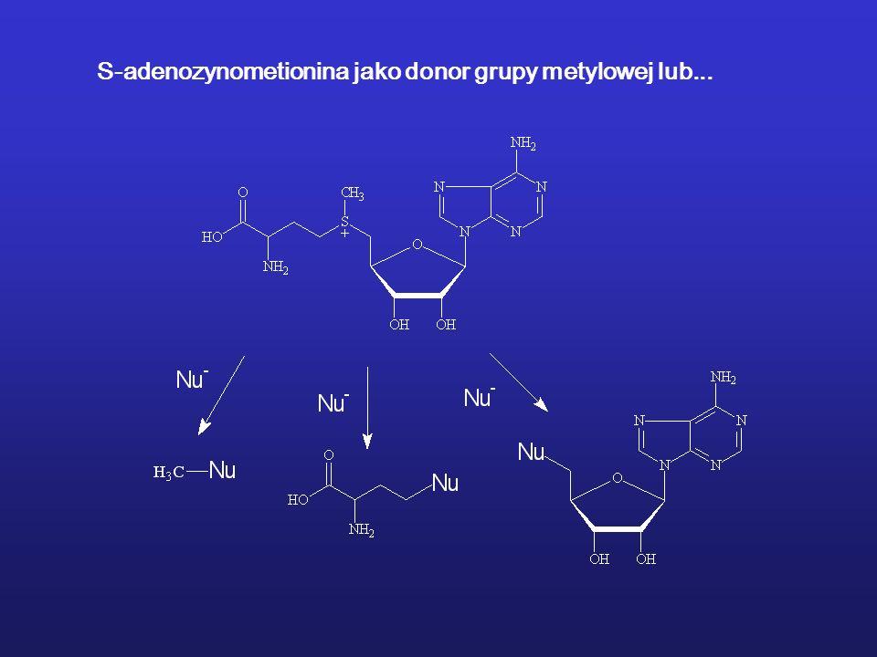 S-adenozynometionina jako donor grupy metylowej lub...