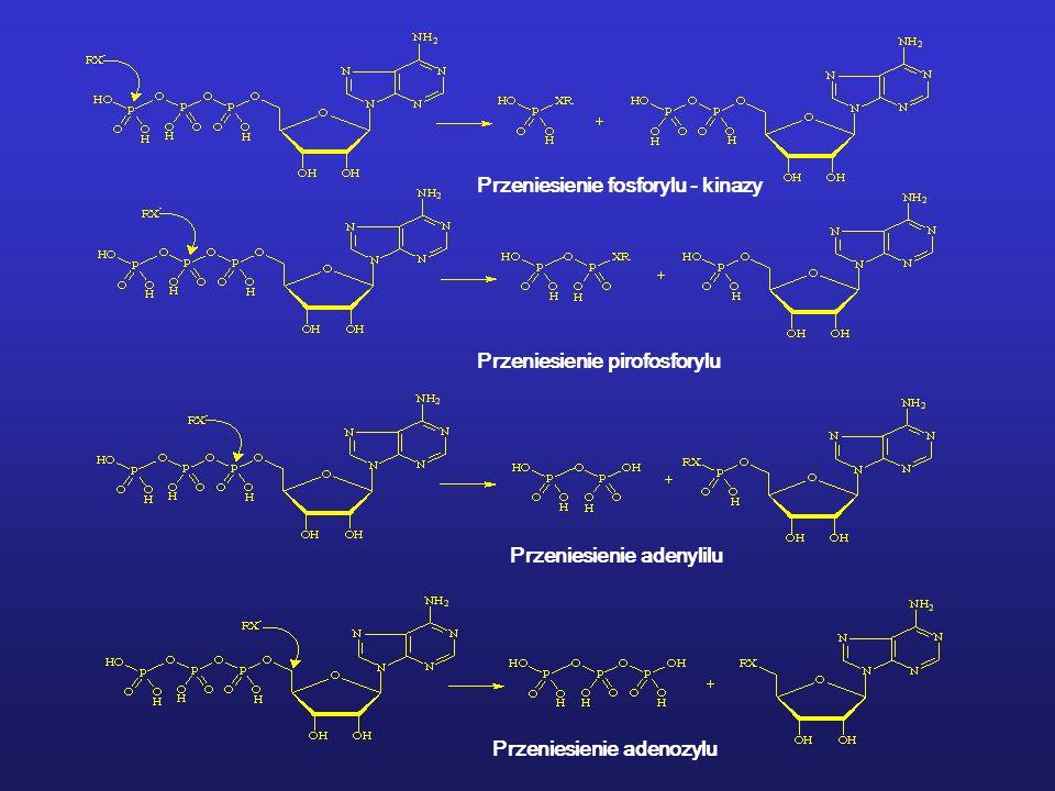 Przeniesienie fosforylu - kinazy