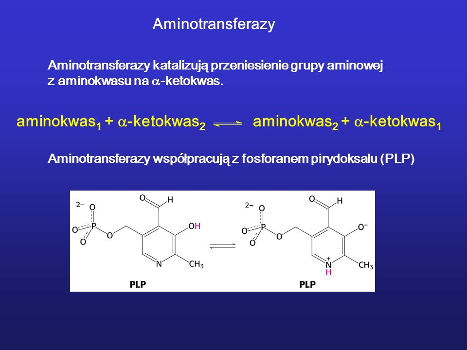 aminokwas1 + -ketokwas2 aminokwas2 + -ketokwas1