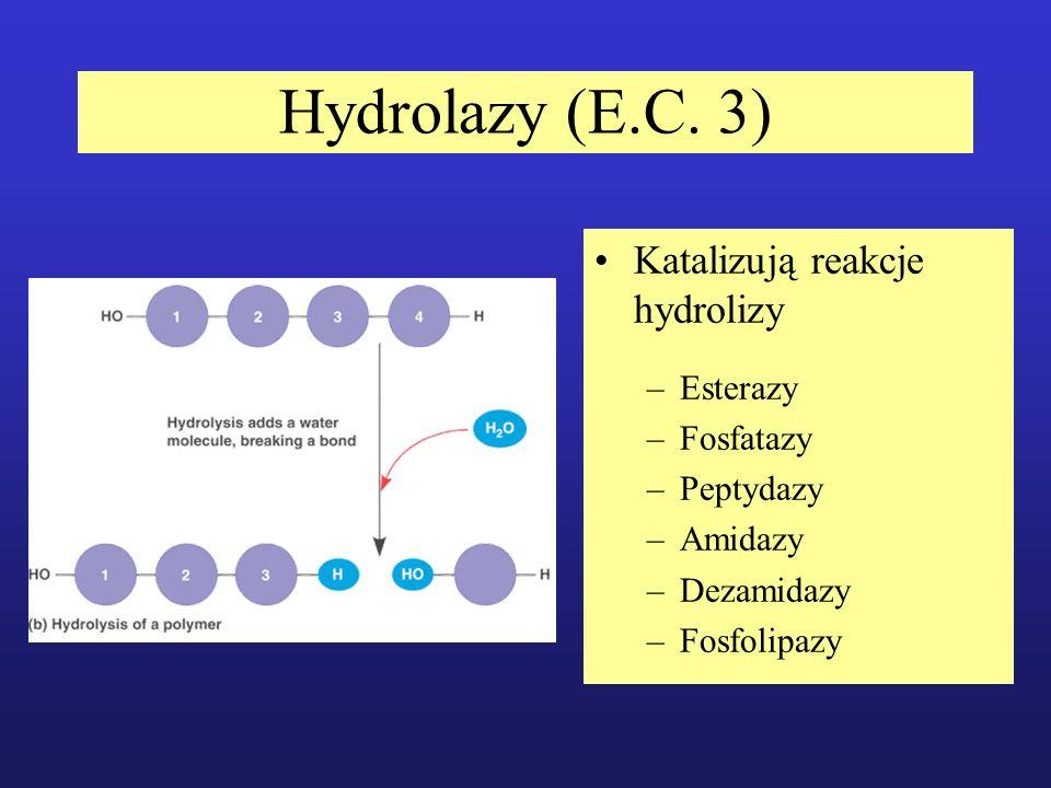 Hydrolazy (E.C. 3) Katalizują reakcje hydrolizy Esterazy Fosfatazy
