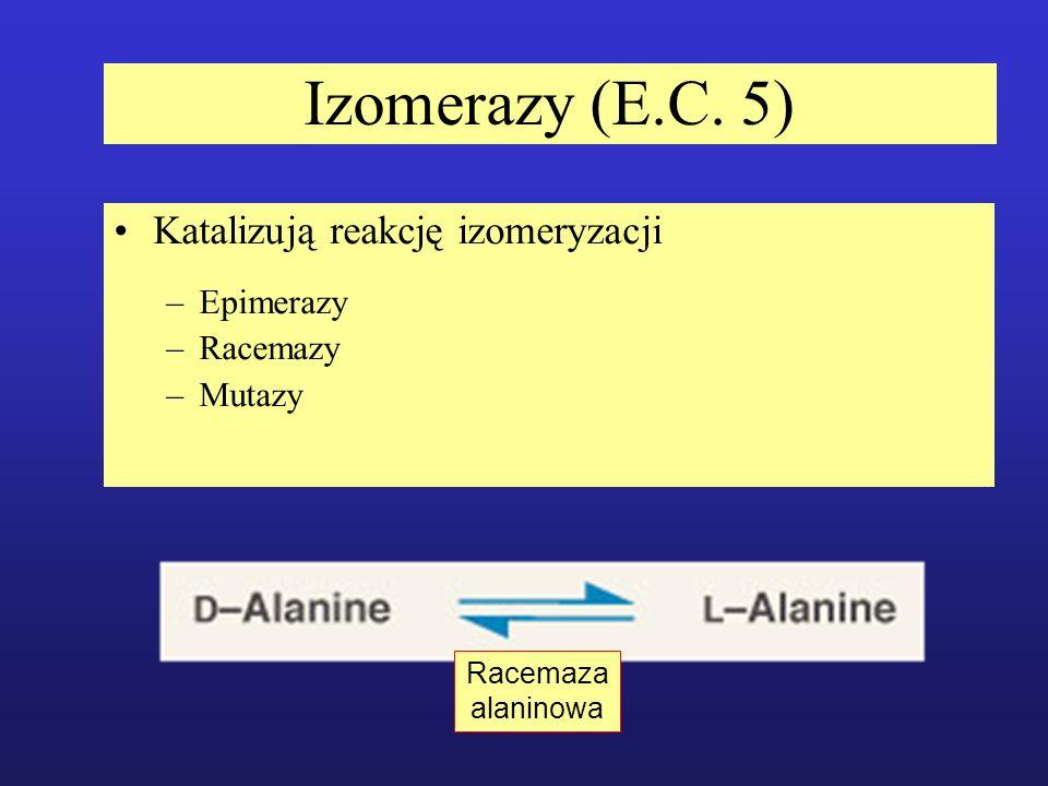 Izomerazy (E.C. 5) Katalizują reakcję izomeryzacji Epimerazy Racemazy