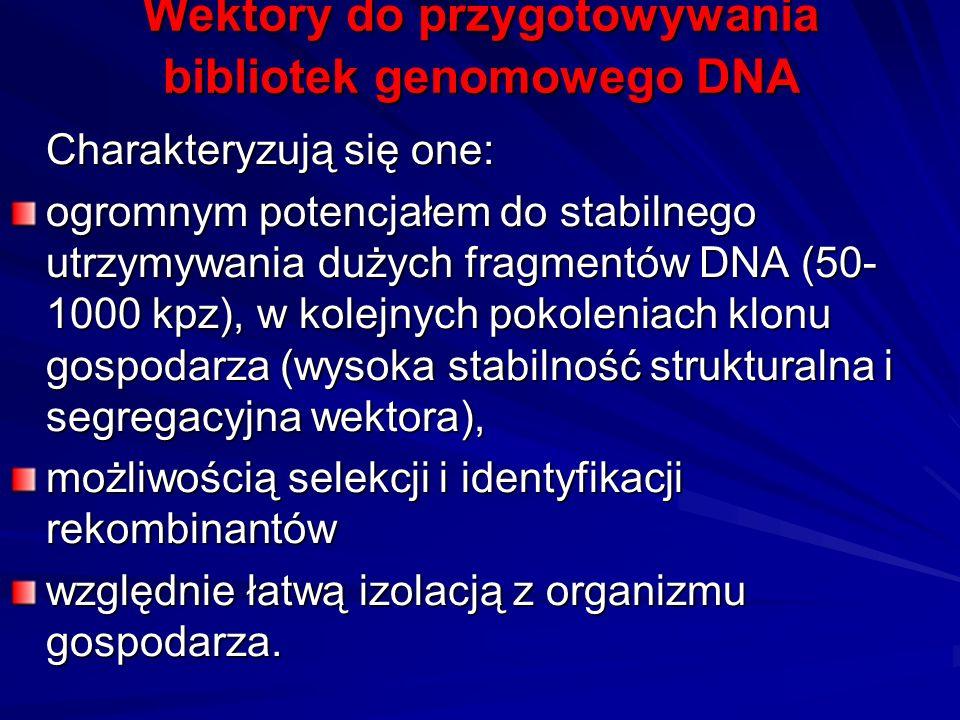 Wektory do przygotowywania bibliotek genomowego DNA