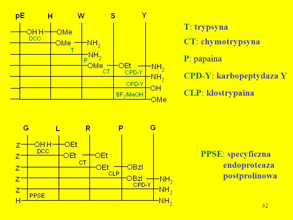T: trypsyna CT: chymotrypsyna. P: papaina. CPD-Y: karbopeptydaza Y. CLP: klostrypaina. PPSE: specyficzna.