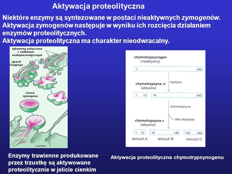 Aktywacja proteolityczna